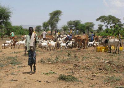 3.i_pastori_hanno_portato_i_loro_animali_ad_abbeverarsi_al_nostro_pozzo