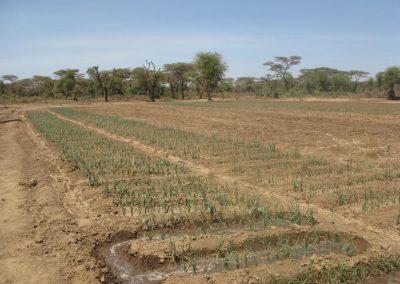 4.campi_coltivati_irrigati_con_lacqua_del_pozzo